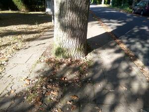 Der Fußweg ist durch einen Baum nicht barrierefrei