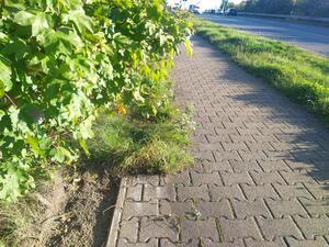 Zugewachsene Radwege reduzieren den Querschnitt und die Sicherheit. Die Breite kann unzureichend sein und andere Verkehrsteilnehmer können gefährdet werden