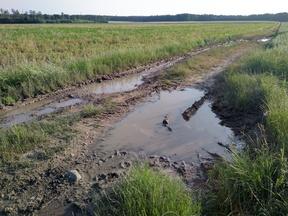 Landwirtschaftliche Wege können zu erheblicher Schlammbildung neigen